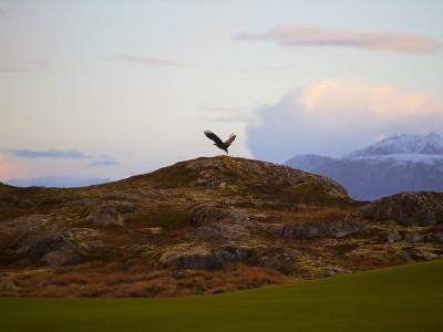 Lofoten Links Eagle
