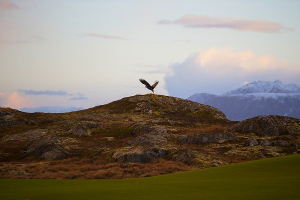 Lofoten Links Eagle